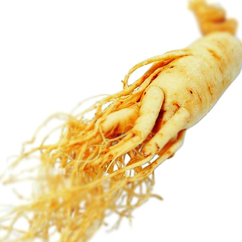 ginseng-root-extract1